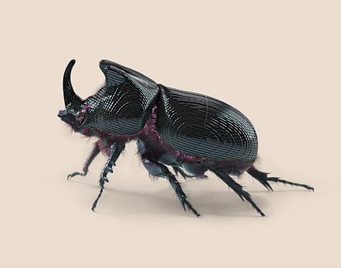 home_beetle